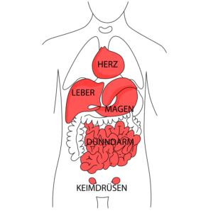 Rückenschmerzen aufgrund von Erkrankungen der inneren Organe