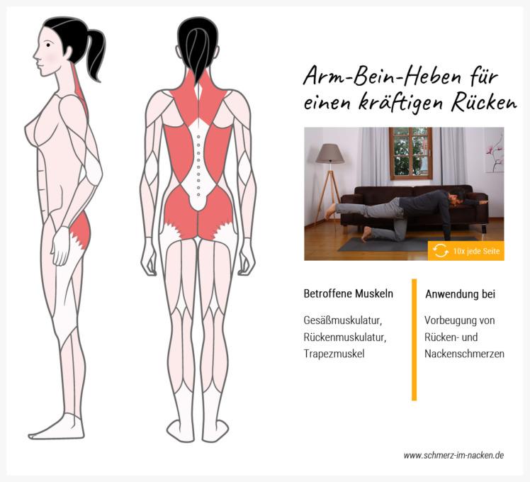 Im Vierfüsslerstand die Arme und Beine anzuheben stärkt den Rückenmuskel