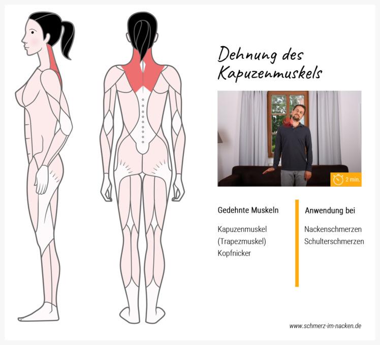 Wenn man von Nackenschmerzen geplagt wird, ist die Dehnung des Kapuzenmuskels sinnvoll