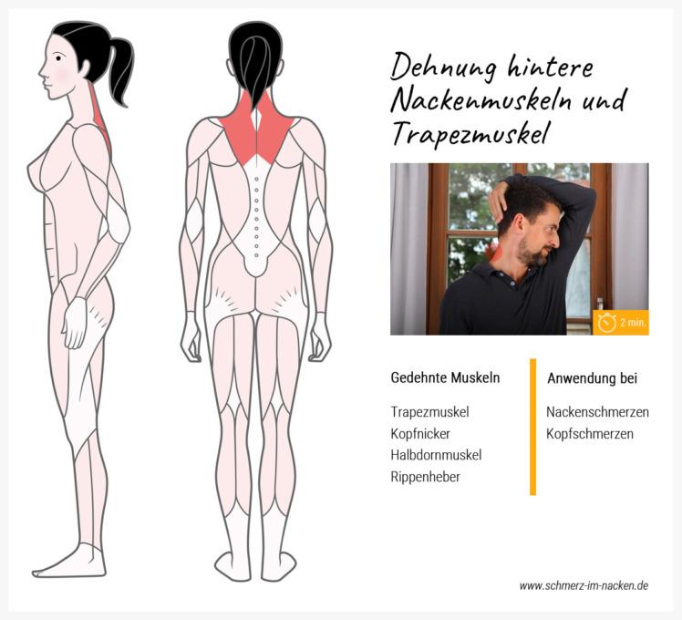 Eine einfache Übung um Nacken- und Trapezmuskel zu stretchen