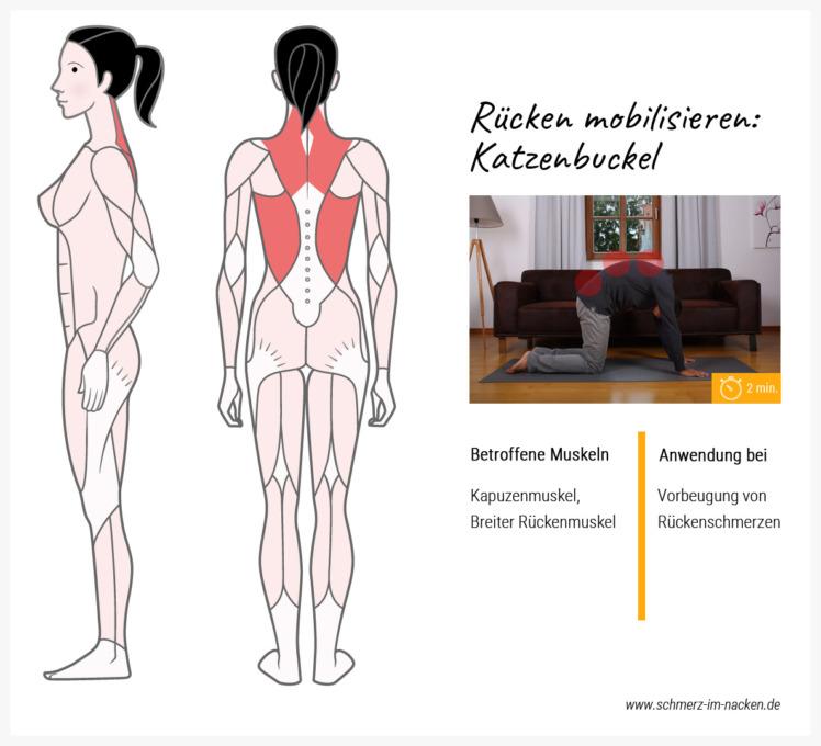 Der Katzenbuckel ist eine weitere sehr alte Übung: Sie gehört zu den Standard-Übungen um den Rückenbereich zu lockern