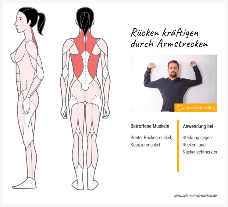Diese Übung stärkt gleichzeitig den großen Rückenmuskel und den Kapuzenmuskel