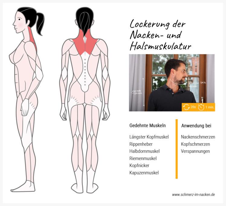 Durch eine sanfte Drehung des Kopfes lässt sich schnell und effektiv die Nacken- und Halsmuskulatur lockern und Verspannungen vermeiden