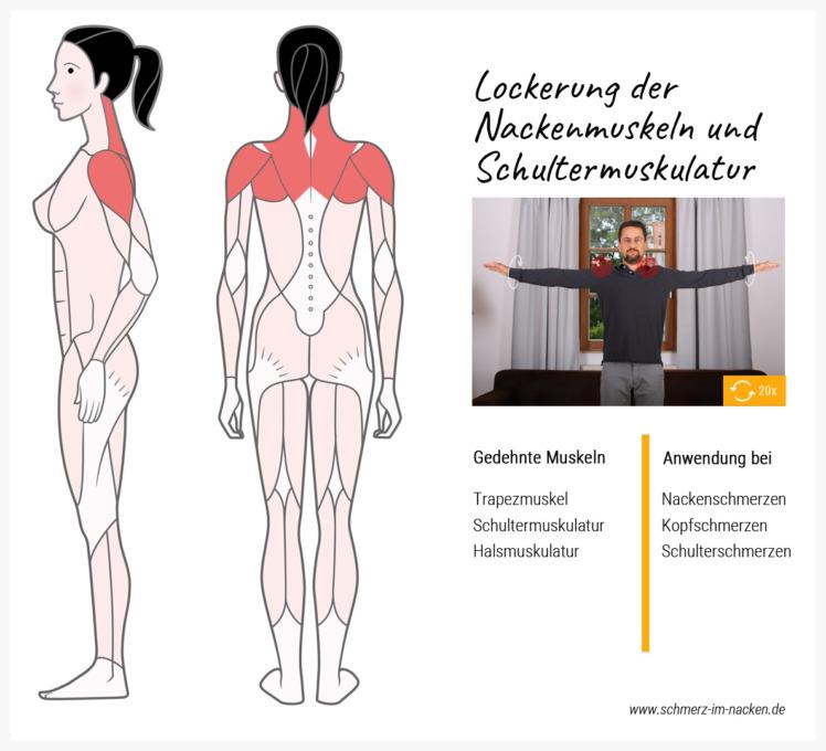 Durch Armkreisen kann man ganz einfach die Nacken- und Schultermuskulatur lockern